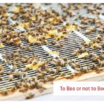 Honigernte auf dem Dach